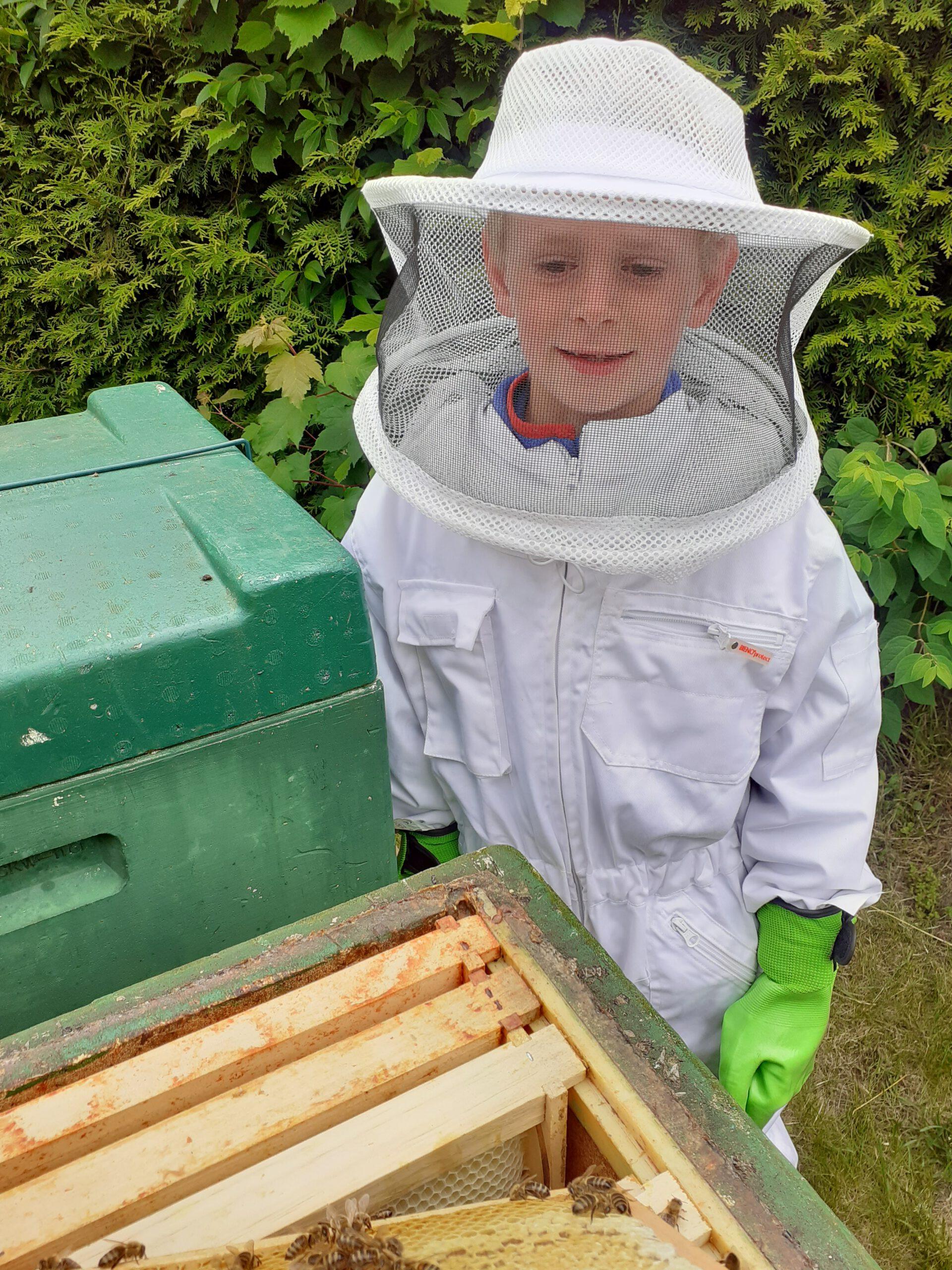 Bienen in unserem Kleingarten